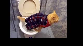 Katze auf dem Klo