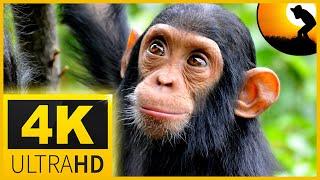 Wild Animals in 4k 🐍🐘Beautiful nature  - Sleep Relax Music 4K UHD TV Screensaver