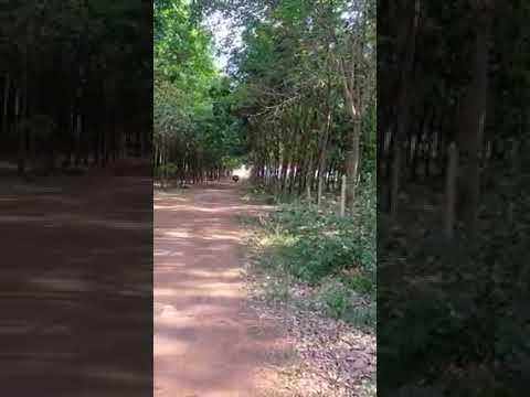 Cần bán 216ha đất cao su vị trí đẹp tại xã Hưng Phước, huyện Bù Đốp, tỉnh Bình Phước