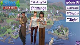 "39 - 100 Stray Pet Challenge  ""Generation 4 Begins"""