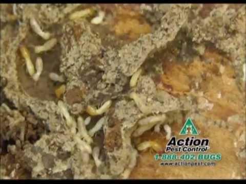 Professional Termite Elimination