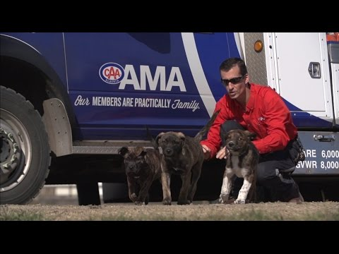 Video: AMA Roadside Comfort Pet Program