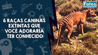 6 raças caninas extintas que você adoraria ter conhecido