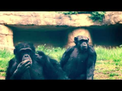 Breakfast With The Chimps