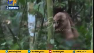 Watch lonely man of Amazon forests..