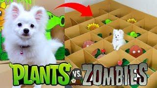 Snowball Dog And Hugo Hamster Play Plants And Zombies Game