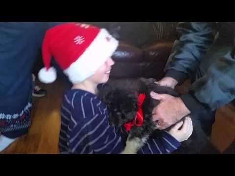 По смртта на неговото 17-годишно куче, ова момче доби големо изненадување за Божиќ