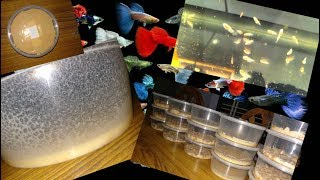 How to Make Cheap Live Food (micro worm)