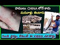 THIS is NOT CHINA || Largest Fish Market (( Sharks, Snakes etc for SALE ))