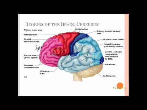 7d brain structure and function - YouTube