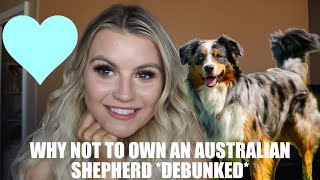 WHY NOT TO OWN AN AUSTRALIAN SHEPHERD//  DEBUNKED
