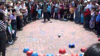 Guinea Pig Lotto! - ¡La Lotería del Cuy! The craziest betting game from Bogotá, Colombia!!