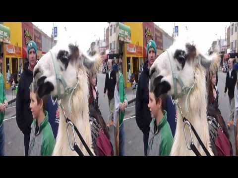 Llamas @ Sunday Streets Richmond (YT3D:Enable=True)