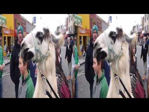 Llamas @ Sunday Streets Richmond (YT3D:Enable=True)