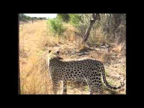 Namibia Cheetah Project