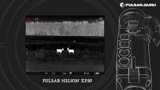 Битва оленей, запись с тепловизора Pulsar Helion XP50