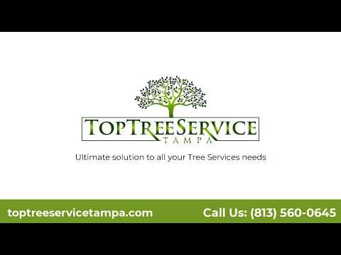 Tree Service Tampa