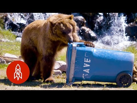 These Bears Put Your Household Items to the Test