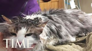Frozen Cat In Montana Survives After Vets Thaw Her | TIME