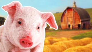 Pigs for Kids | Year of the Pig 2019 | Wild Animals