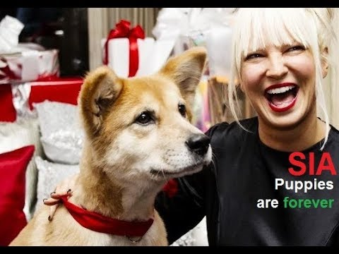 Sia - Puppies are forever