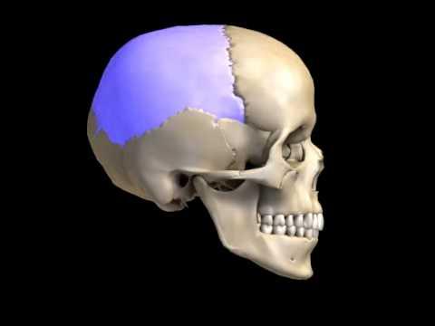 Baixar skull bones