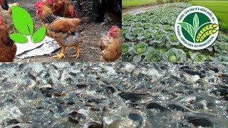 Nuôi gà, thả cá, trồng rau: Chàng trai 96 thu về hàng chục triệu mỗi tháng | VTC16