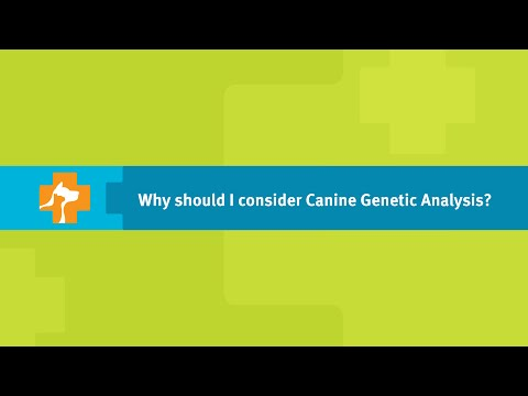 Why Should I Consider a Dog DNA Test? - Banfield Pet Hospital Ask a Vet