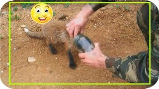 So Touching !! ANIMAL ASKS for people's help
