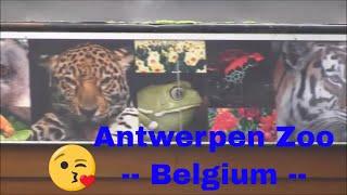 zoo family - Antwerpen Zoo - Zoo Animals - Funny Animals