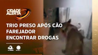 Trio preso após cão farejador encontrar drogas em residência