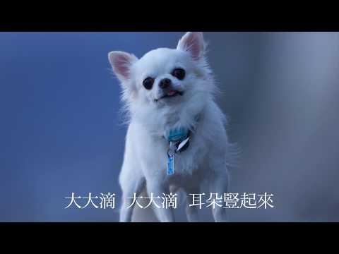 吉娃娃歌 奇瓦瓦 Chihuahua チワワの歌 歌:yu-wen chiang 訳:慧嫺張 MUSIC BY SHOICHI YABUTA