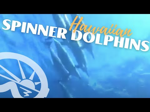 "Hawaiian Spinner Dolphins at ""First Cathedral"" with Extended Horizons Scuba"