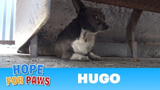 Little Hugo was attacked by dogs and finally gets rescued by Hope For Paws