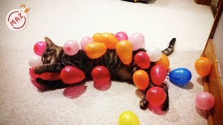 Try Not To Laugh 🐱 Cats Vs. 🎈 Balloons Cats Playing Balloons Compilation 2019