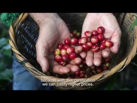 Growing Green for ECOM: Sustainability profits Nicaragua's coffee farmers