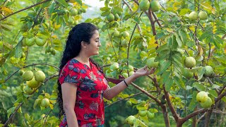 The day of Guava with yummy recipies..,from my home garden| Poorna - The nature girl