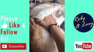 Owner Annoying His Fat Cat: Sleepy Lazy Cat Funny Video