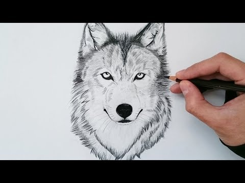Como Dibujar Un Lobo Paso A Paso Videomoviles Com