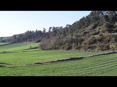 Retalls de la primavera segarra a Suró