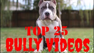 Top 25 Best of American Bully Videos Vol.1