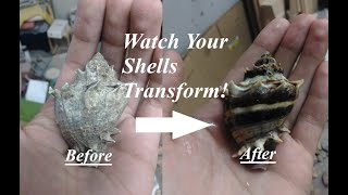 How to Clean Shells Using Muriatic Acid!