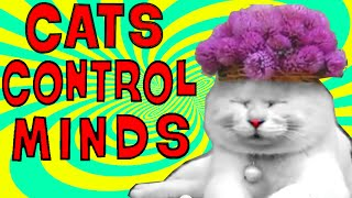 Cat Mind Control: Your cats hypnotize! They got the shining!. No toxoplasmosis needed