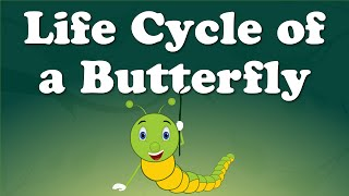 Life Cycle of a Butterfly | It's AumSum Time