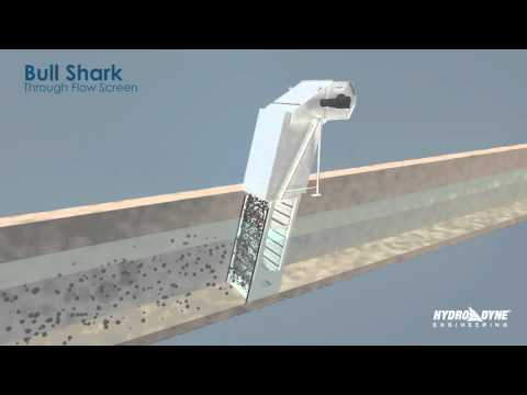 Bull Shark Through Flow Screen Animation