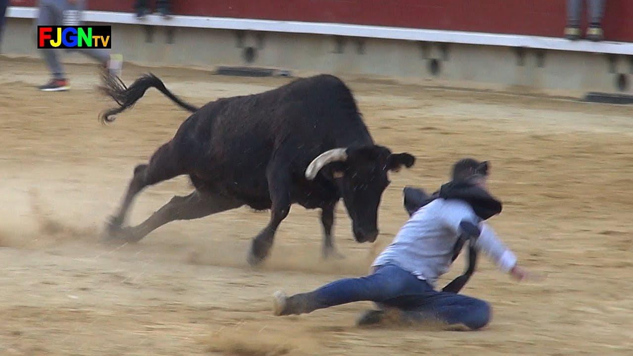 Vacas Enfundadas Magdaleneras 2017 - Castellon