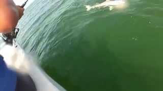 サメが丸呑みにされる