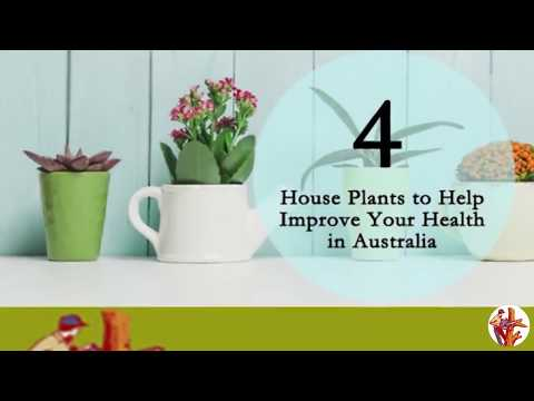 4 House Plants to Help Improve Your Health in Australia