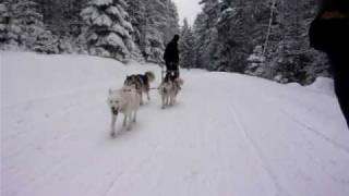 Initiation au mushing
