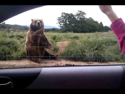 What A Polite Bear